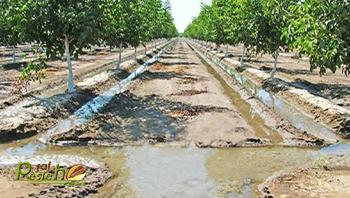 خرده مالکی بزرگترین مشکل کشاورزی رفسنجان